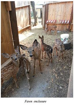 fawn enclosure